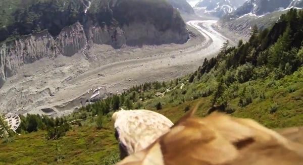 Flying eagle mount