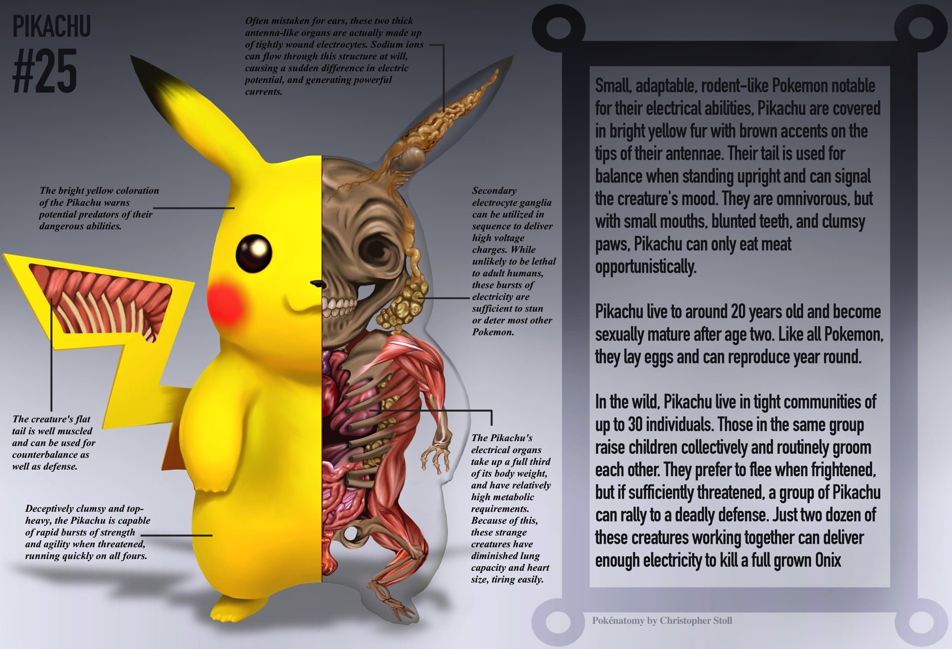 骨格や内蔵がバッチリ!ポケモンを内部図解した「pokenatomy」   ipod love
