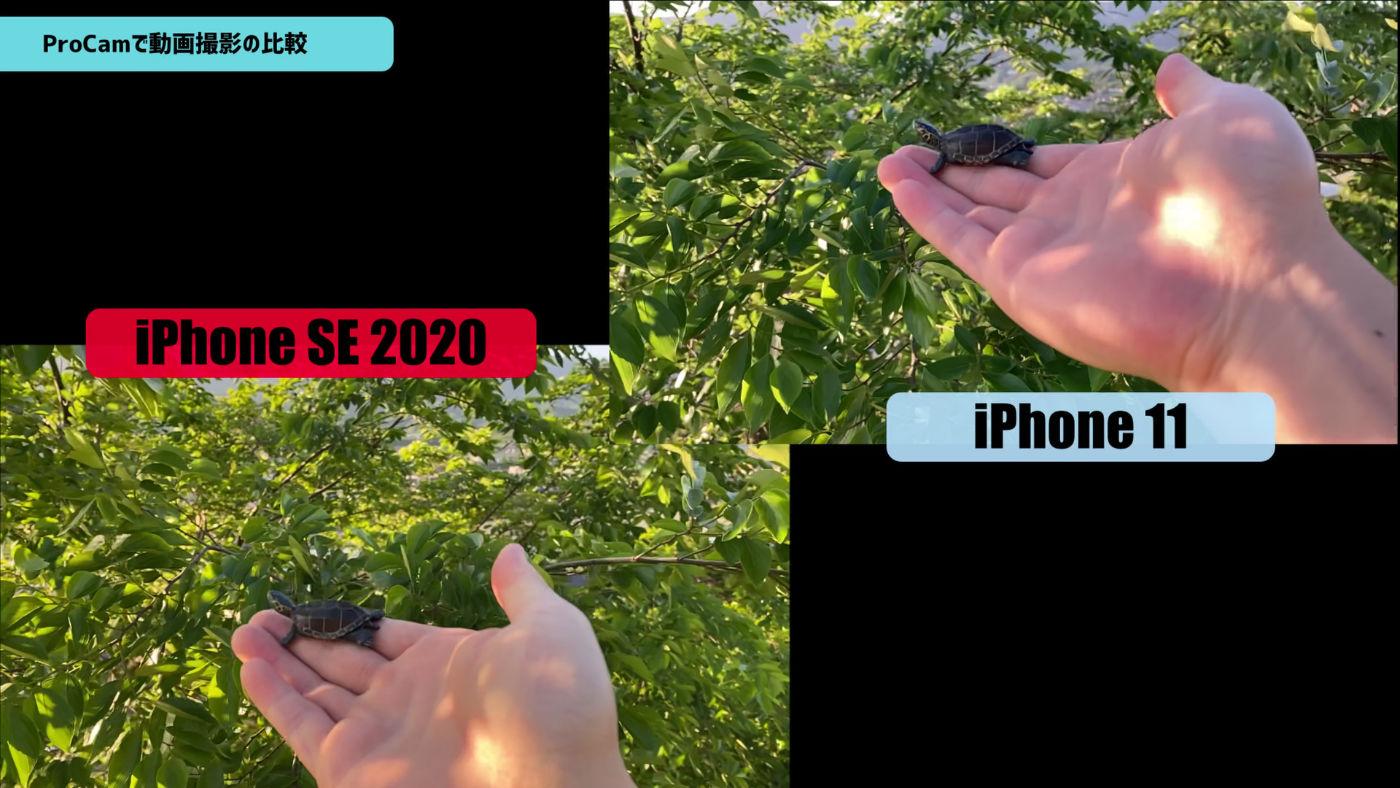 IPhoneSE2020 vs iPhone11 ProCam 02