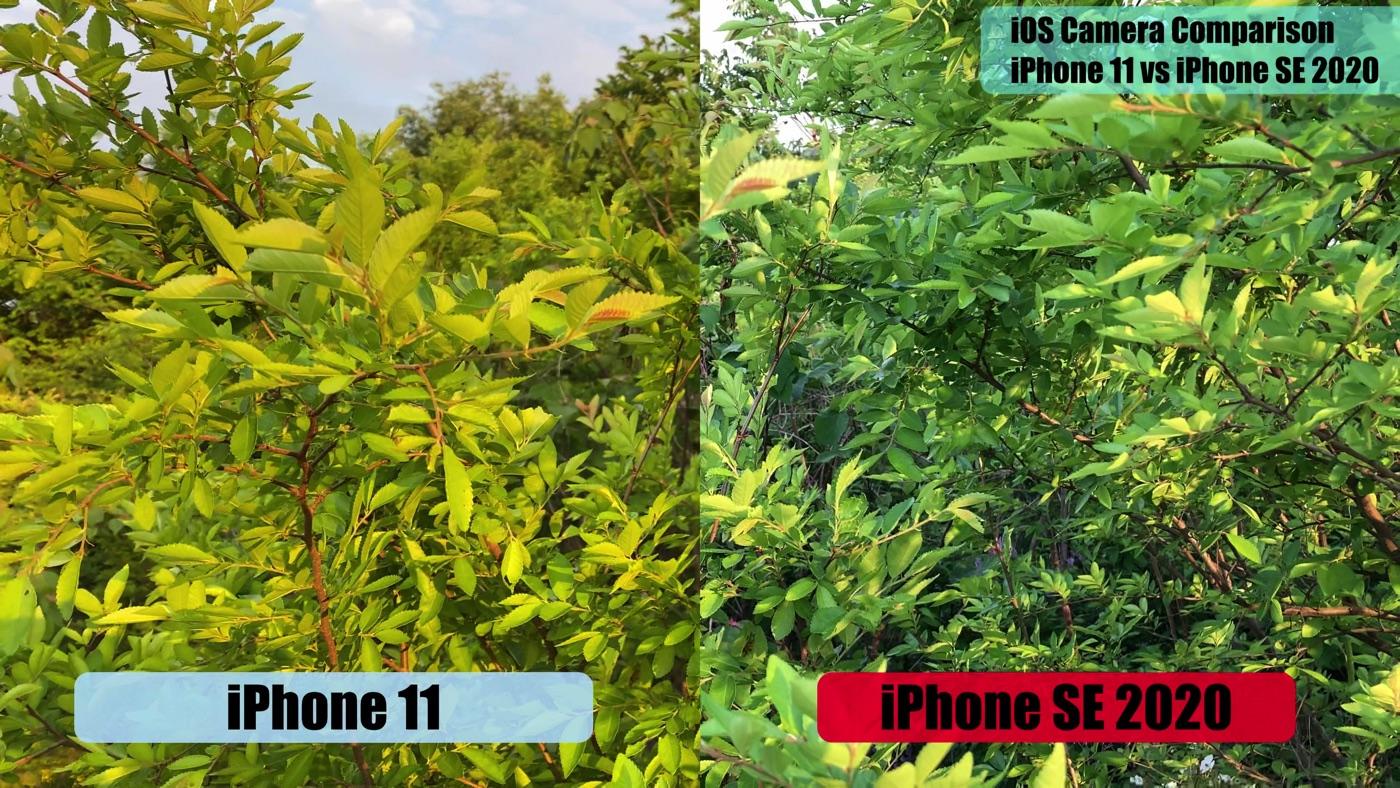 IPhoneSE2020vsiPhone11 4kvideo 05
