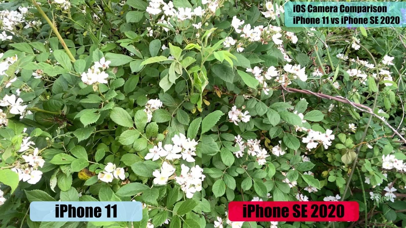 IPhoneSE2020vsiPhone11 camera 03