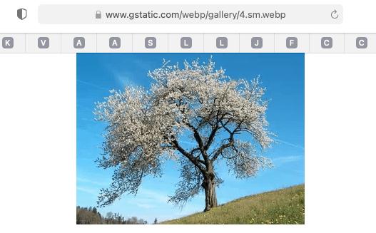 MacOSBigSur113 WebMsupport 03